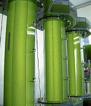 La Argentina cerca de ser el país con mayor uso de biocombustibles