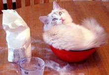 Játék - Kerítsd be a cicát!