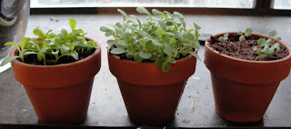 growing things, kids and plants, teaching kids responsibility
