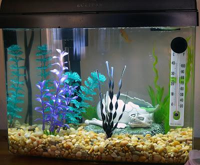 Ryby akwariowe - Urządzamy akwarium