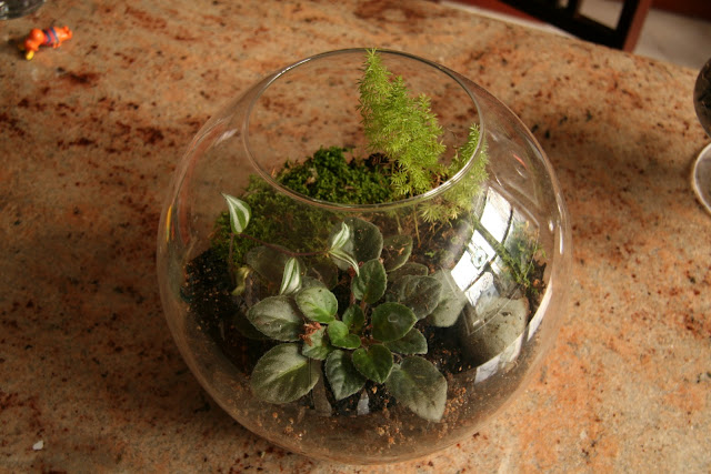 Gardening and gardens a mossy terrarium for Garden soil meaning