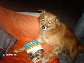 """Se """"Beethoven"""" fosse um animal racional, até ele recomendaria o meu livro..."""