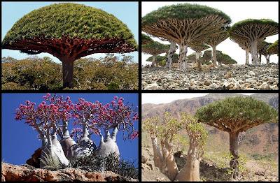 Extraña y aislada isla de Socotra