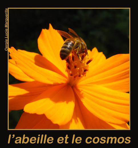 abeille_cosmos
