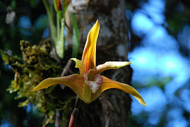 Orchid and Boatnical Garden of the Amazon