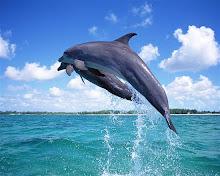 Interação com golfinhos faz bem a saúde.