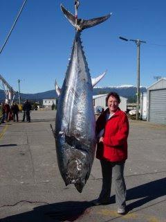 world record sailfish