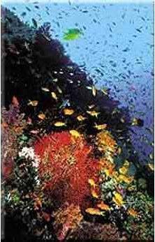 Bunga Karang