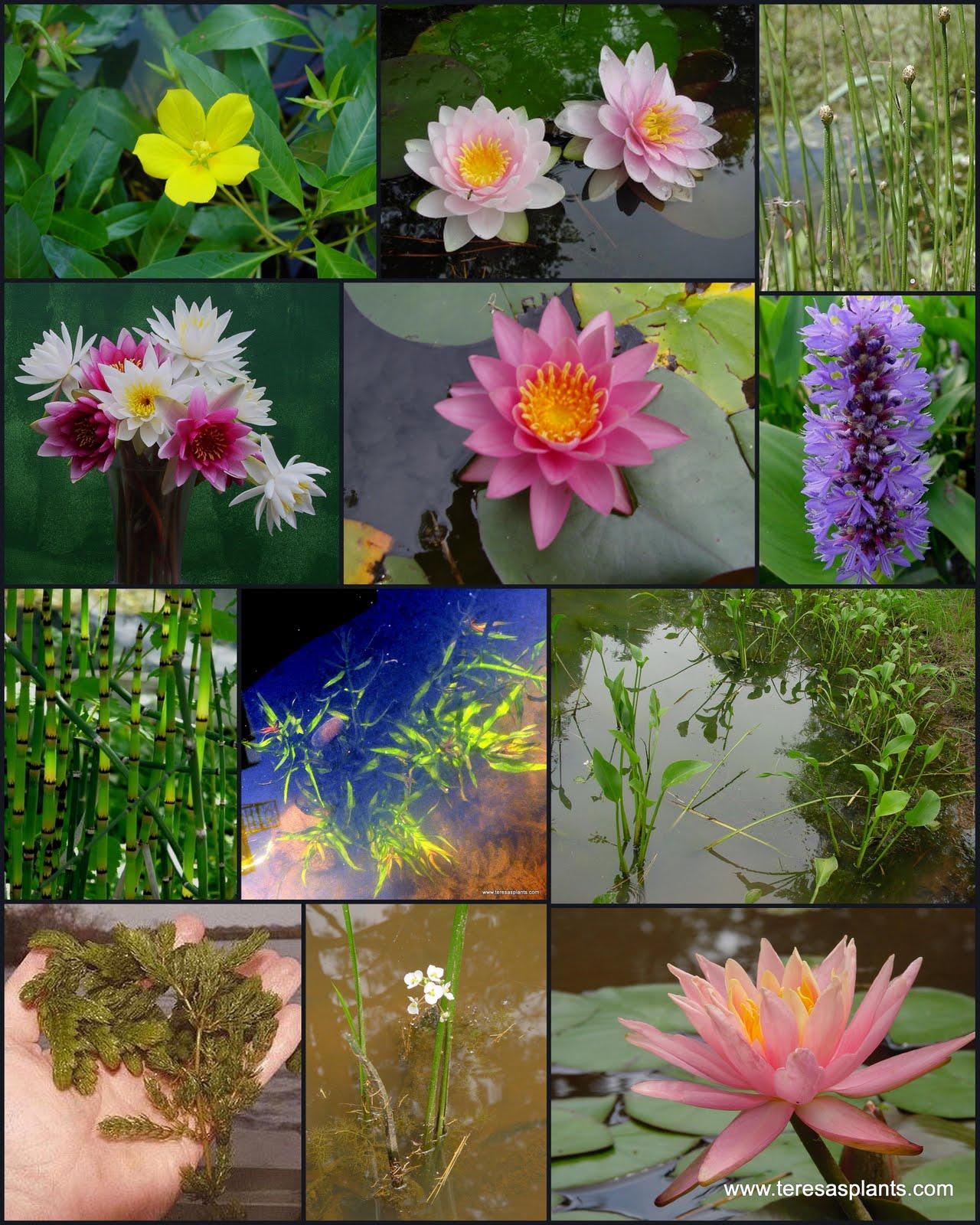 Wedding Supplies Terrarium/vivarium Supplies Live Moss Water Garden Plants
