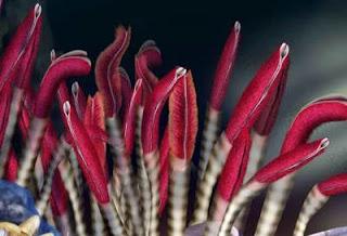 http://1.bp.blogspot.com/_ziPJWp4LX_o/S-0u8CSFg6I/AAAAAAAAEd0/AQUshQL9XtU/s1600/500x_tubeworms.jpg