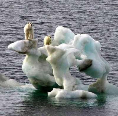 http://1.bp.blogspot.com/_ziPJWp4LX_o/S12_SSVMygI/AAAAAAAADy0/51fncPo_psM/s400/polar_bears480.jpg