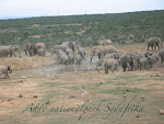 Elefanter Addo National park, Sydafrika