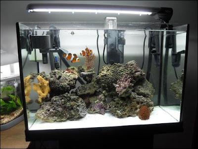 Aquaflash 43 el acuario para peces payaso for Pescados para acuario