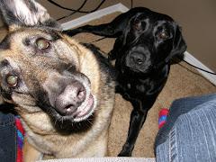 Aspen & Roxy