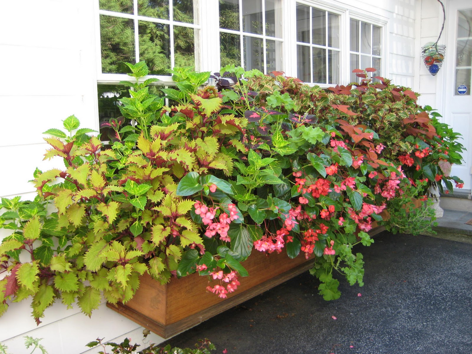 Window box ideas for shade annual flowers pots container gar.