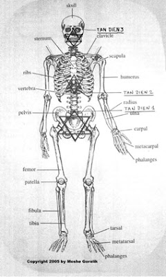 Human Skeleton jewish star