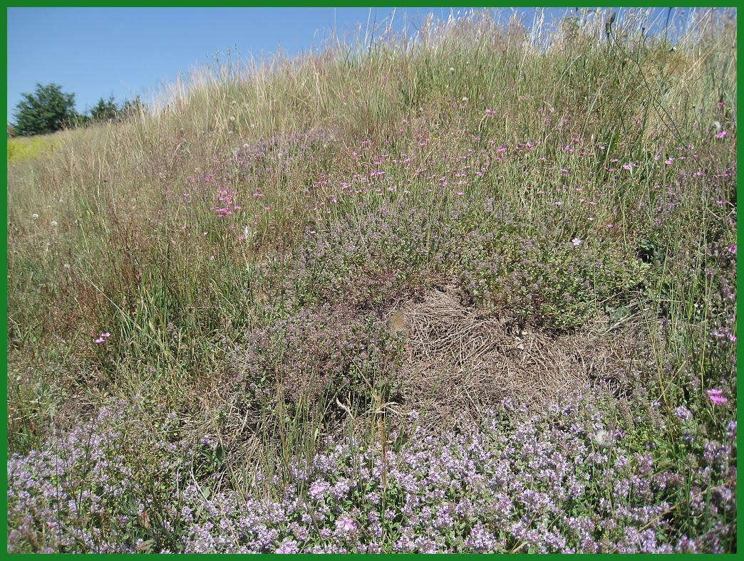 Gräsersorten momentaufnahmen juli 2010