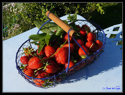 fraises_30_05_09.jpg