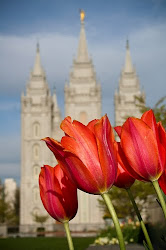 We are members of The Church of Jesus Christ of Latter-day Saints. Find out what we believe!