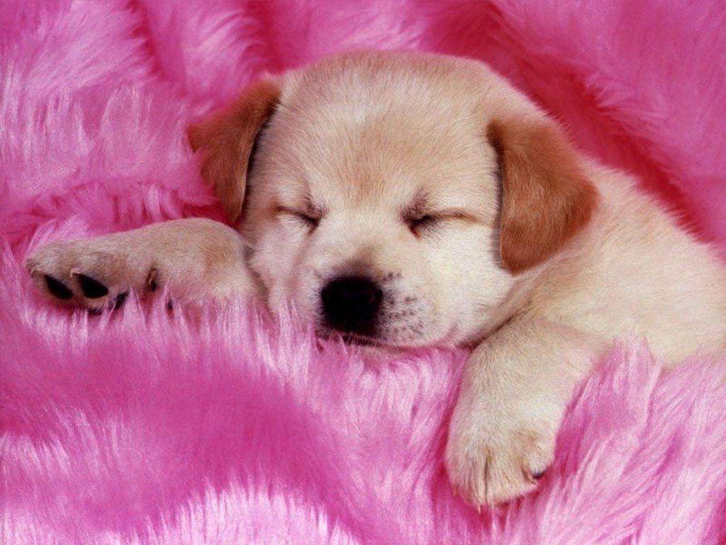 Famosos animais mais fofos do mundo: o sono gostoso! AT62