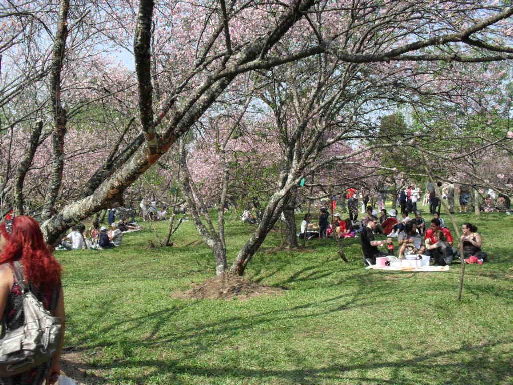 #67413B PARQUES SUSTENTÁVEIS Sustainable Urban Parks Parques Urbanos  1024x768 px Banheiro Ecologico Seco 3297