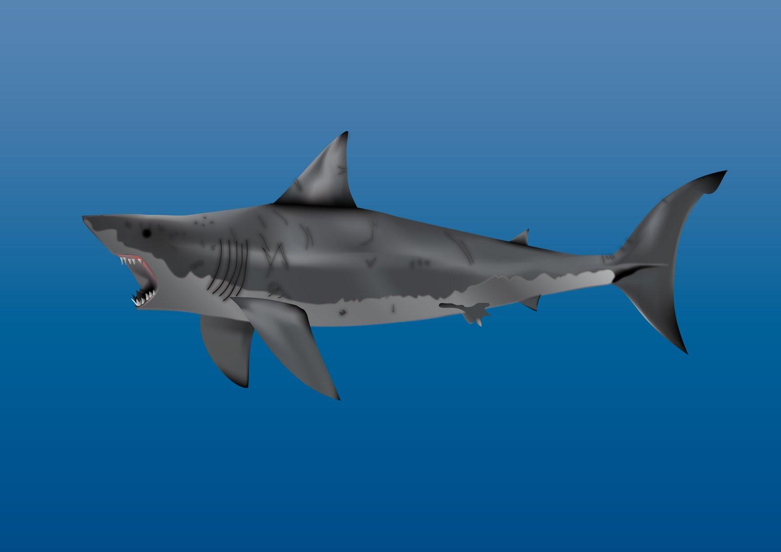 Unreal Creativo: Tiburón Illustrator