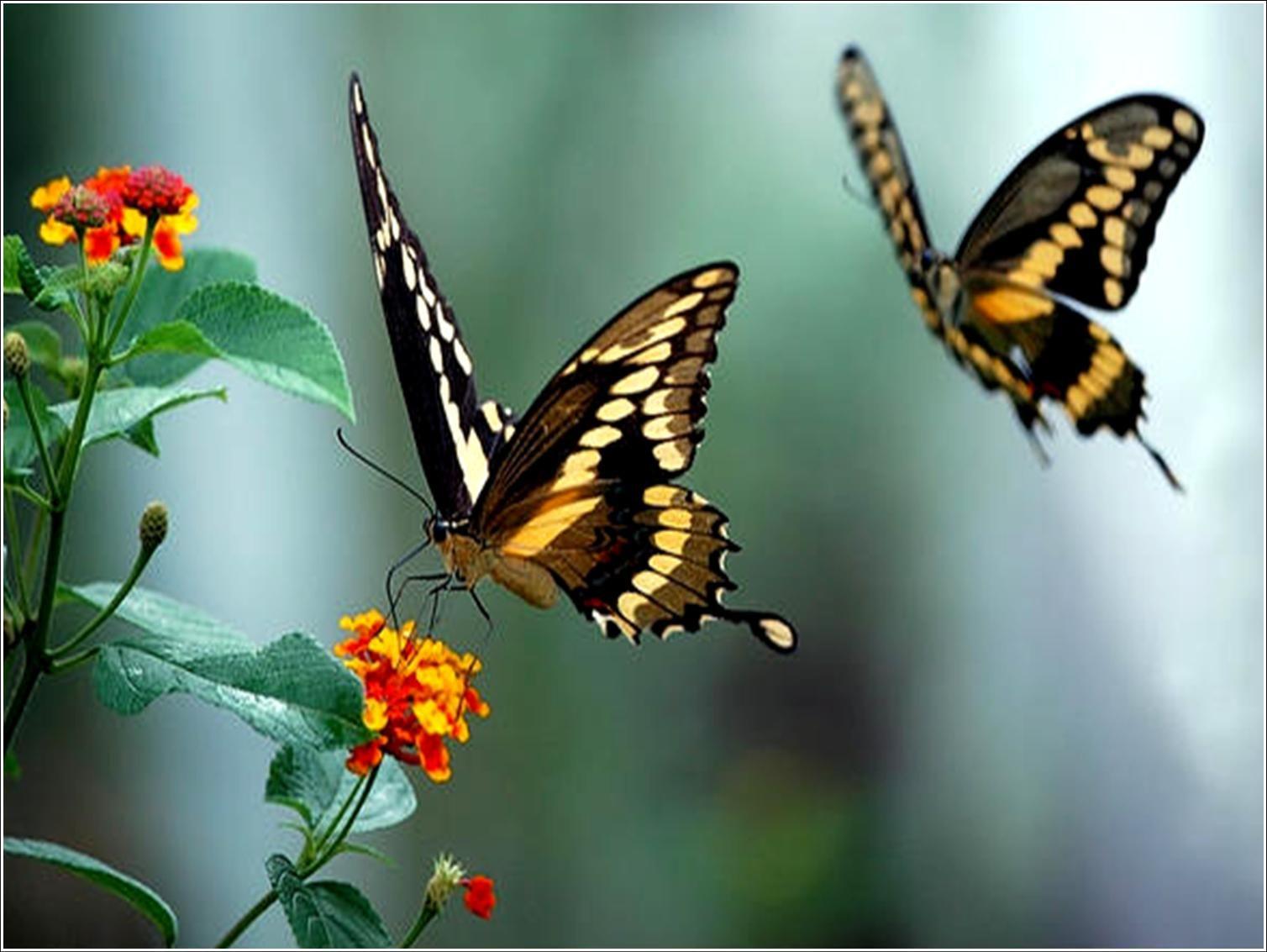 http://1.bp.blogspot.com/_zu5HLtMFumM/TEeyr8DInbI/AAAAAAAAABI/iGCSoBFdm4c/s1600/borboletas.jpg