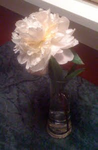 Photo of a peony in a vase.