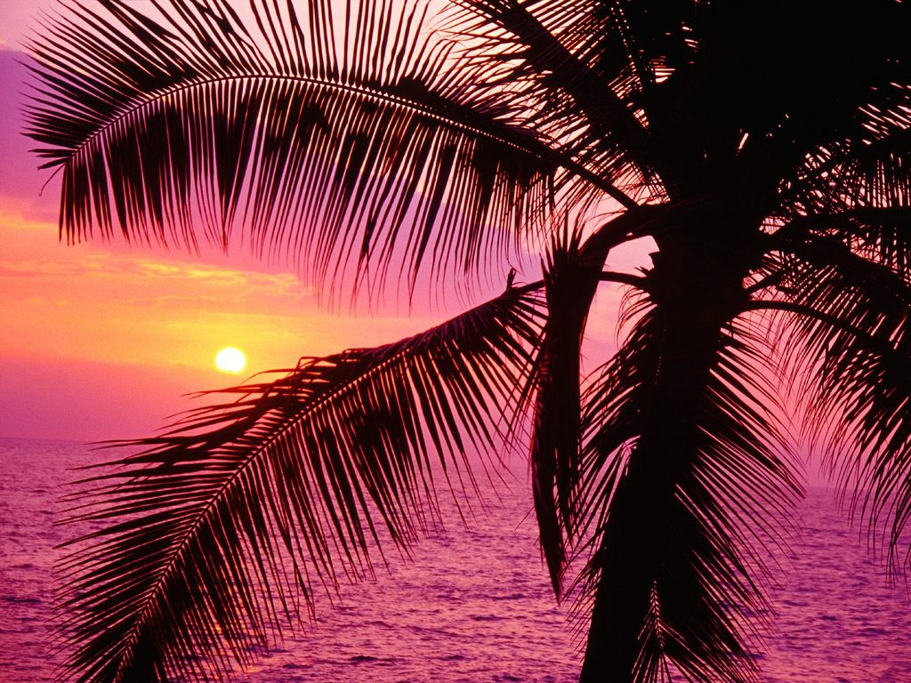 http://1.bp.blogspot.com/_zvyiRRgdC7k/TSa2E3QTAsI/AAAAAAAAFrA/2yGo8jfqJJo/s1600/pink_sunset-2.jpg