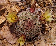 Desert Baja