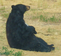 The Praying Bear