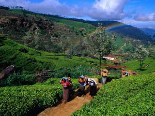 http://1.bp.blogspot.com/_zxtdM_mZZ9w/TCYTBGcaP2I/AAAAAAAAUxY/Z8CRk-I_Y3s/s1600/tea-workers1.jpg