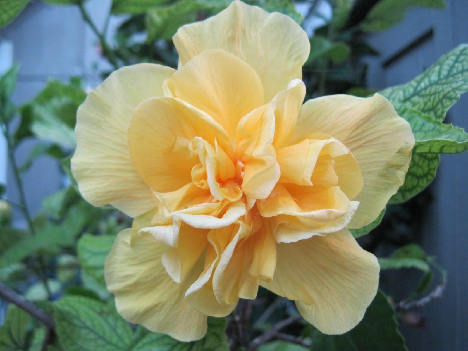 Real pretty flowers mightylinksfo