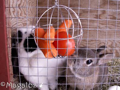 Klockan 13.00 - Kaninerna äter sin lunch