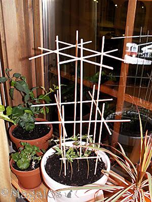 Blompinnar ihop-limmade till en klätterställning åt Blomman för dagen.