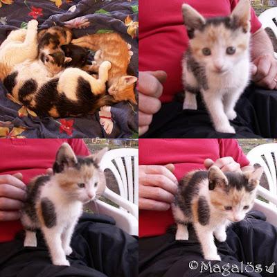 Collage på kattfröken som baby.