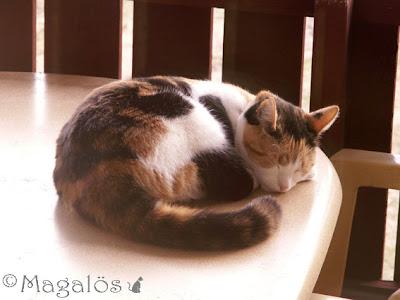 Sovande kattfröken på balkongbordet.