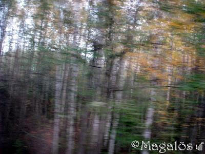 Träd som skymtar snabbt förbi tågfönstret.