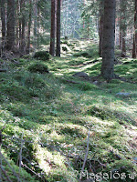 Höstskog i solljus 1.