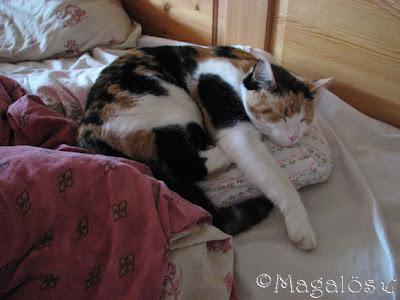 Kattfröken som sover så skönt på min kudde.