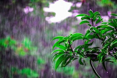 Manfaat Air Hujan Untuk Kecantikan Wajah