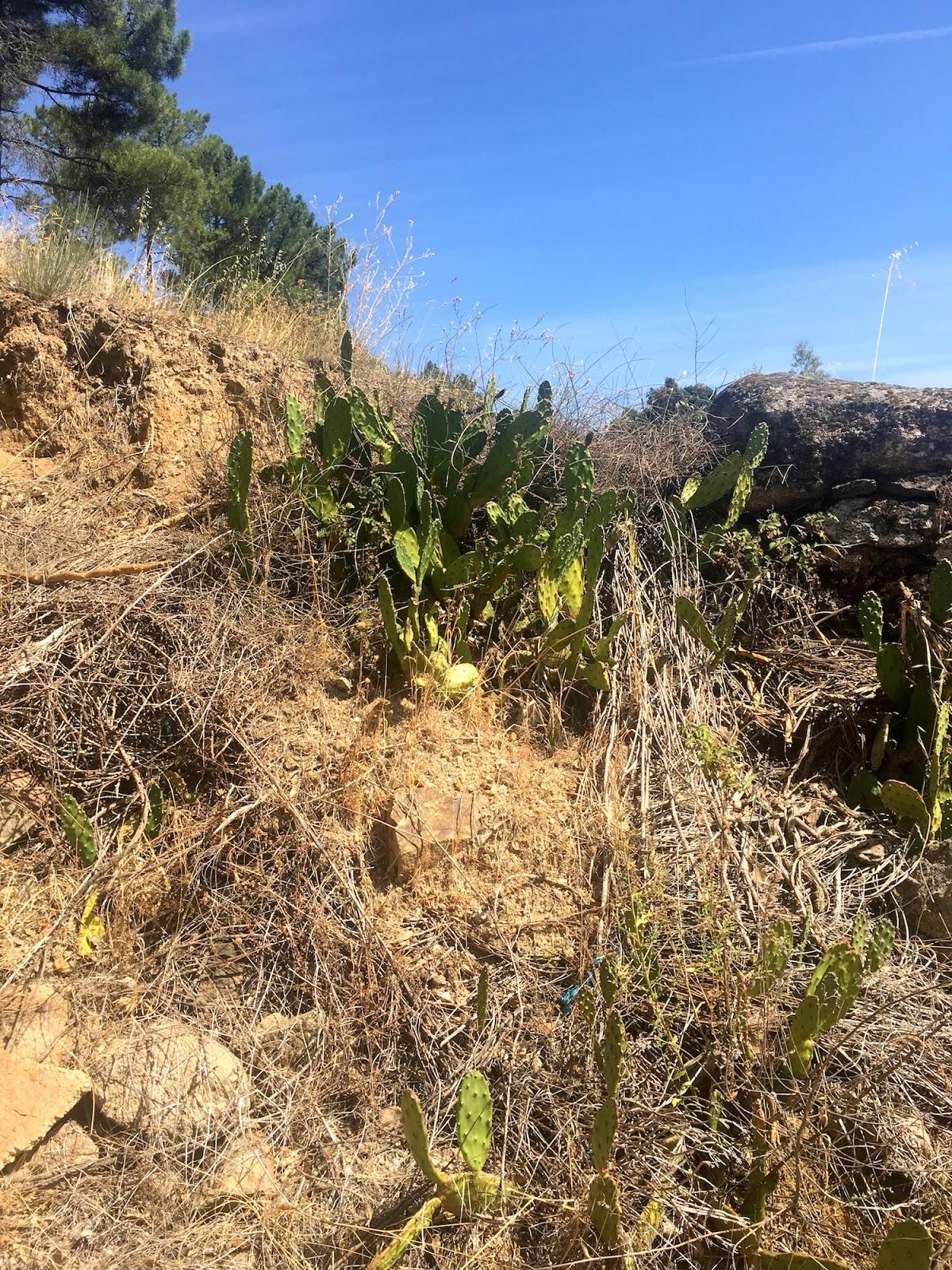 cactus portugal