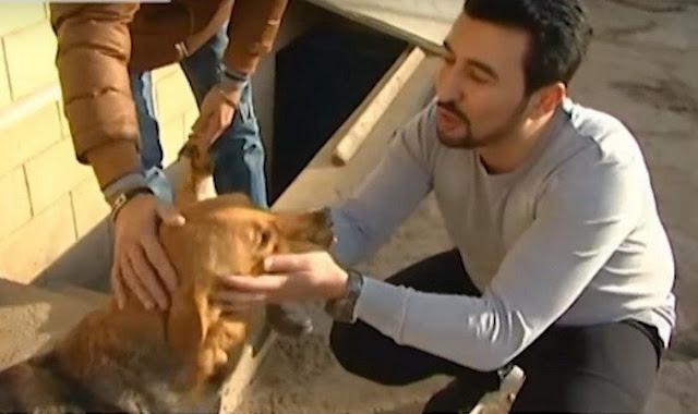 18-летний парень подбирает на улицах искалеченных собак, выхаживает их и учит снова доверять людям. Он спас 350 собак!