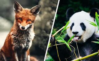 जंगली जानवरों के नाम हिंदी और इंग्लिश में ▷ Name Of Wild Animals