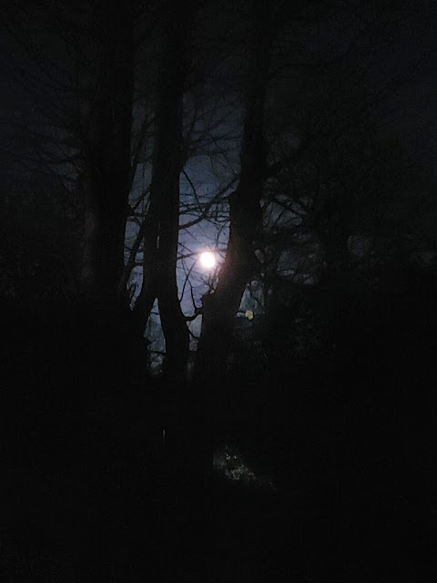 A full moon framed by trees