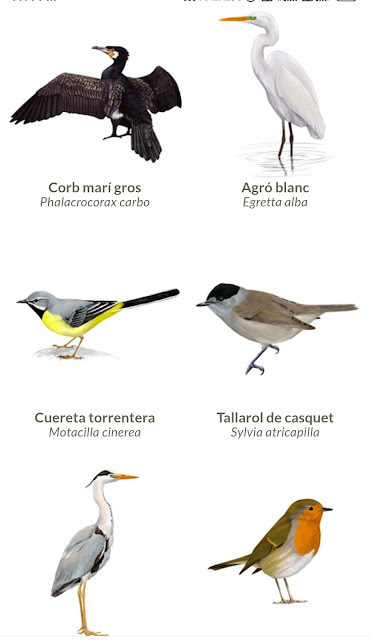Amazing Birds Voice Toching Technology.