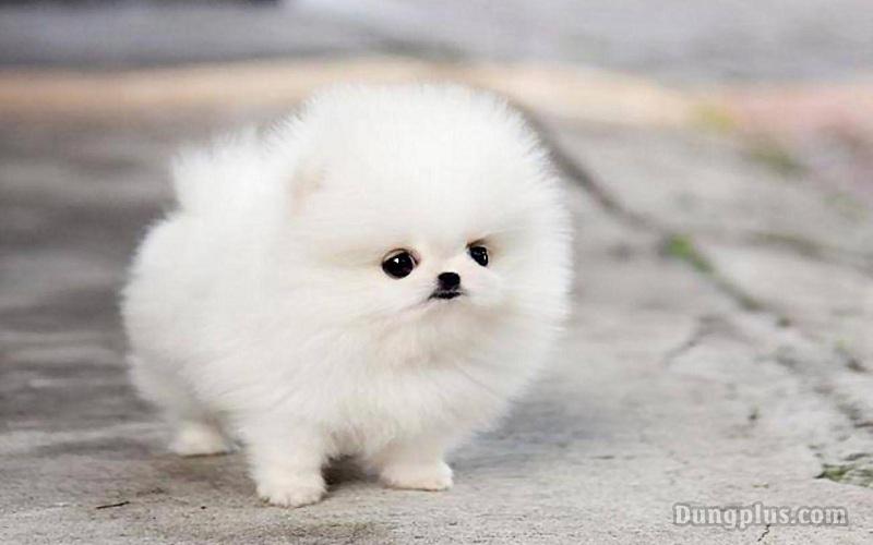 hình ảnh chó con dễ thương nhất 5