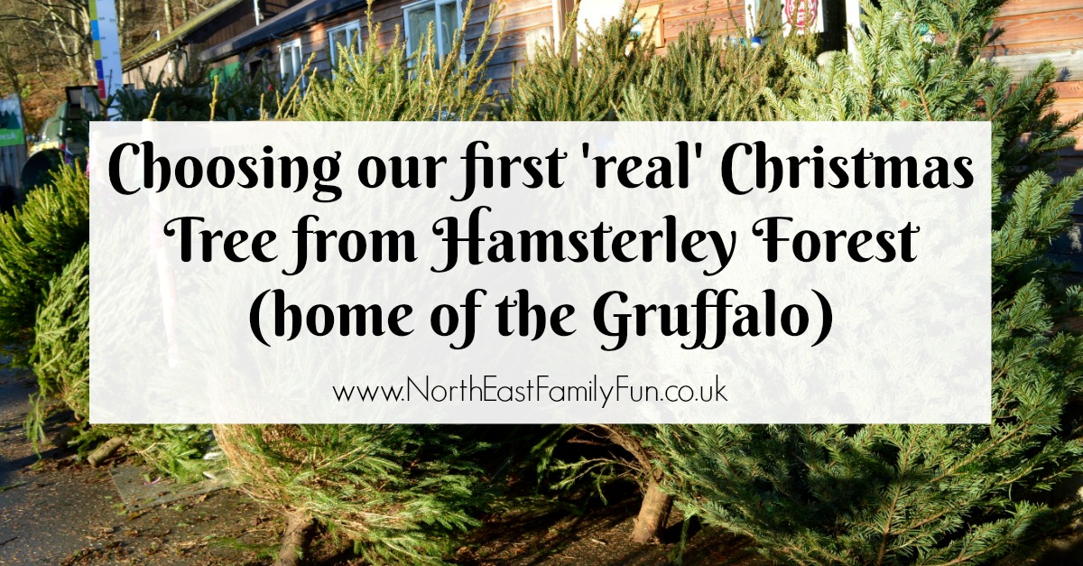 Why you should choose a real, sustainable Christmas tree from a Forestry Commission Forest (Hamsterley Forest in Durham and Kielder Forest in Northumberland) -