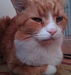 Cat Lump Throat 83