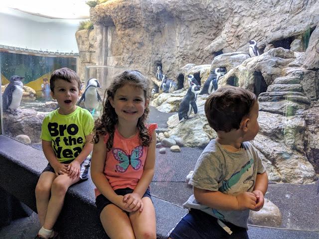 Gatlinburg, vacation, travel, family fun, to do with kids, Gatlinburg attraction, Ripley's Aquarium, Ripley's Aquarium Gatlinburg, Gatlinburg TN, Tennessee, fish, aquarium, tourist attraction, Gatlinburg with kids, penguin playhouse, penguins
